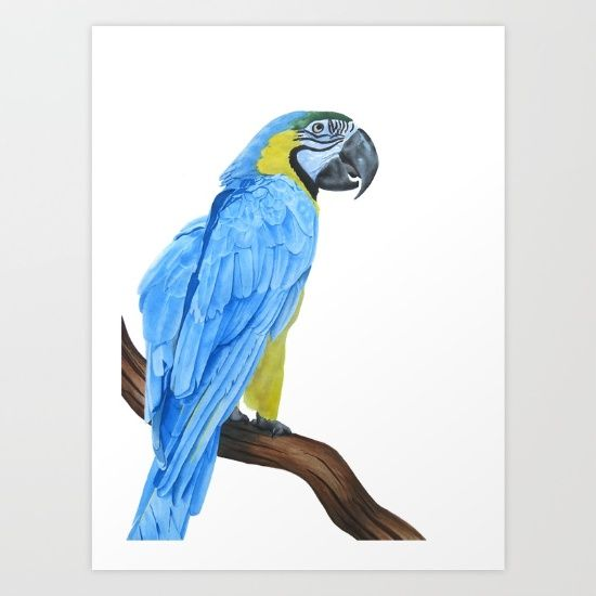 watercolour blue and gold macaw bird