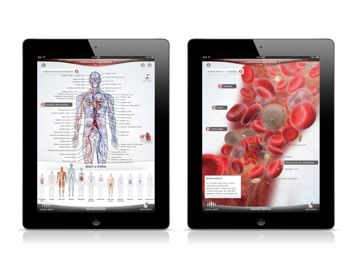 31 best human body systems images on pinterest   life science, the, Muscles