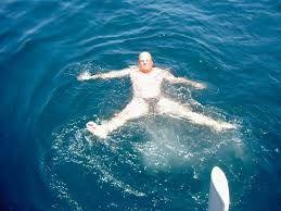 Billedresultat for haj ø