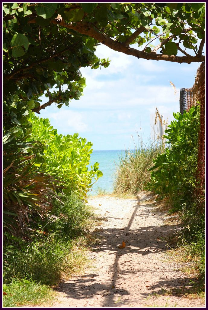 Seahorse Beach holds a special place in my heart, Vero Beach Fl