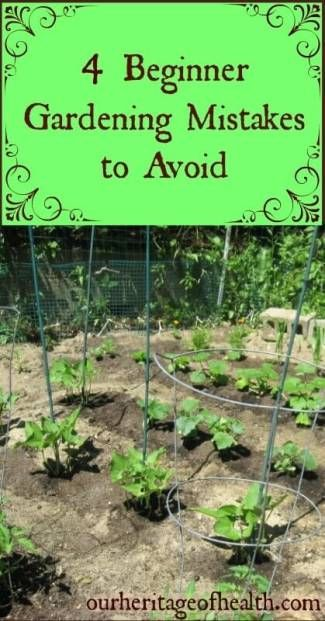 If you're a beginning gardener, avoiding these four common mistakes can help you to have a better, more productive garden   ourheritageofhealth.com