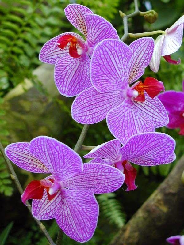 Cambridge, England Botanic Garden, Orchid