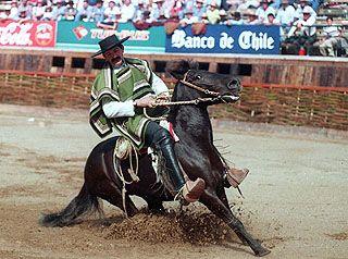 Chilean+Culture | Chilean Rodeo - Chile Culture - Pepe's Chilean Adoration Page