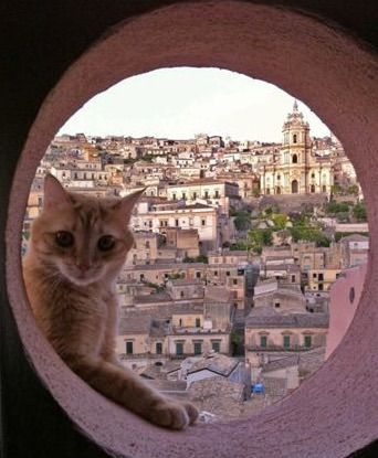 Ginger welcomes you at San Giorgio Suites Modica www.sangiorgiosuitesmodica.it