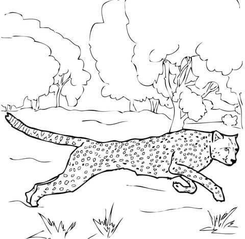 Imagini pentru desen ghepard