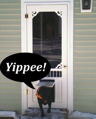 Pet Doors, Dog Doors, Custom Pet Doors For Your Screen Door .