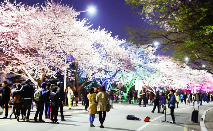 3月~5月の春祭り | 韓国観光公社