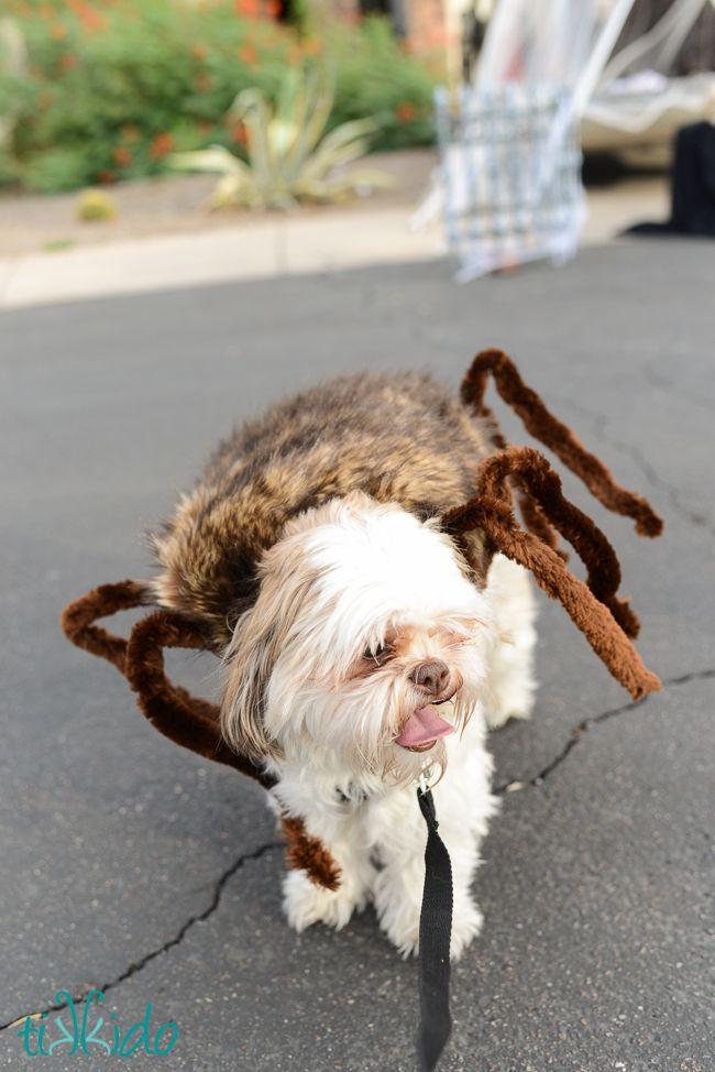 die besten 25 hund spinnenkost m ideen auf pinterest spinnen kost m f r hunde lustigste gifs. Black Bedroom Furniture Sets. Home Design Ideas
