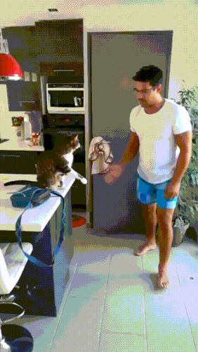 Gifopotamo.com. Best GIFs every day! and like OMG! get some yourself some pawtastic adorable cat apparel!