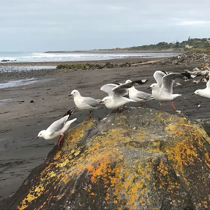 Birds @ Fitzroy Beach #fly#freedom#inaweofhiscreation