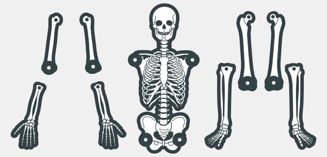 Printable Skeleton Template in 8 Colours