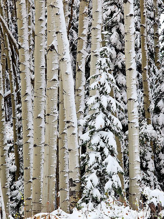 Gunnison National Forest, Colorado by Jody Grigg