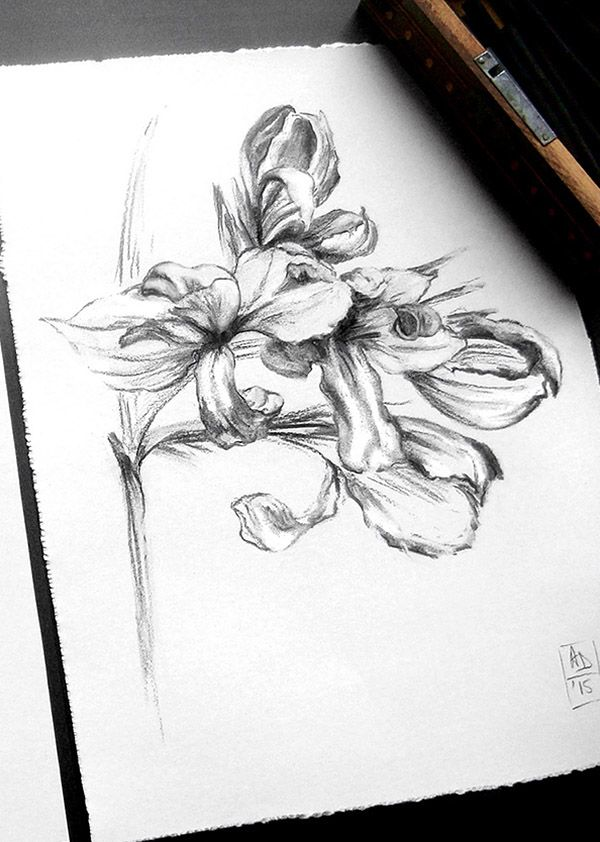 Canna flower no. 2 by Alina Draguceanu. Life drawing - charcoal on paper. Desen în cărbune.