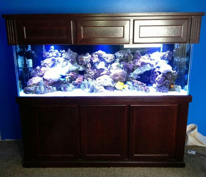 180 gallon reef set up 3 weeks ago fully stocked and for 180 gallon fish tank