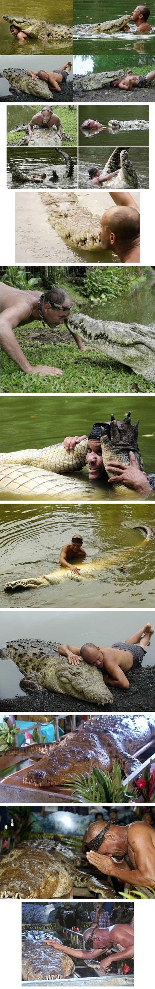 This crocodile was wounded by a hunter and this man took care of him. During three years, gave him food to the mouth and treated his wounds. This friendship lasted 23 years, until Poncho died.