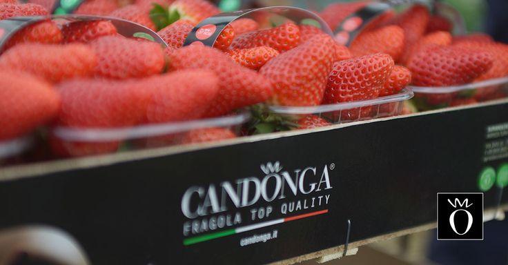 Candonga Fragola Top Quality® vuol dire gusto, amore, passione per la buona terra italiana. #candongatop #fragole #happybasilicata