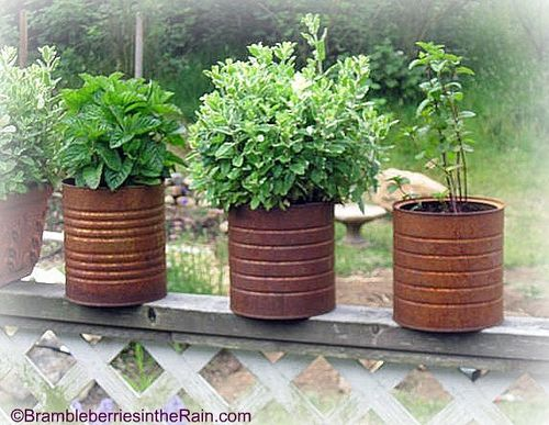 The 11 best images about Herb garden on Pinterest