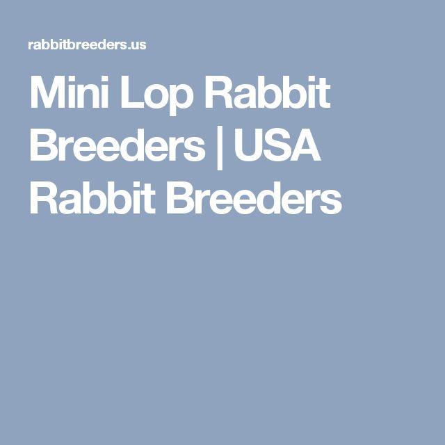 Mini Lop Rabbit Breeders | USA Rabbit Breeders