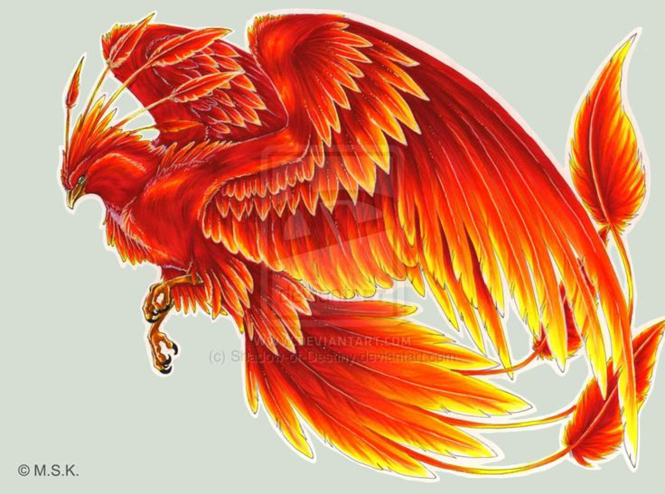 phoenix | the black phoenix represents the north