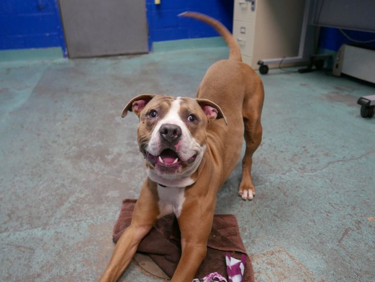 Check out this awesome Boroughbred available for adoption at the Brooklyn Animal Care Center!