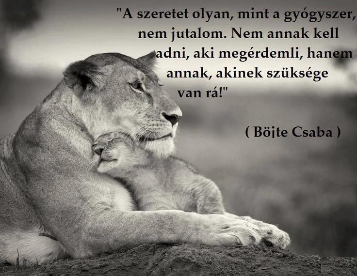 Böjte Csaba, ferences rendi szerzetes idézete a szeretetről. - A kép forrása: Megosztom # Facebook