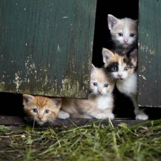 These barn kittens are just too cute !