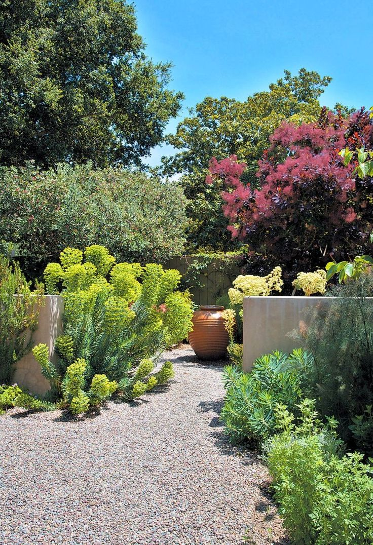 Euphorbia great sculptural effect - Gravel used as a base with no separation of borders / path, smoke bush in background.