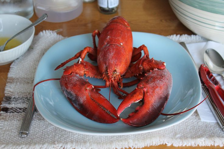 https://flic.kr/p/wUCzKq   Nova Scotia  lobster