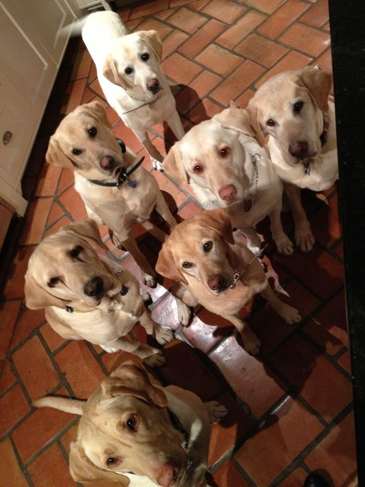 we r all here to ask U 4 a meal..perhaps with a little meat and more meat please..we will just wait until U get it..thanks so much..enjoy your meal my sweeties..GOD Bless U all 4 ever