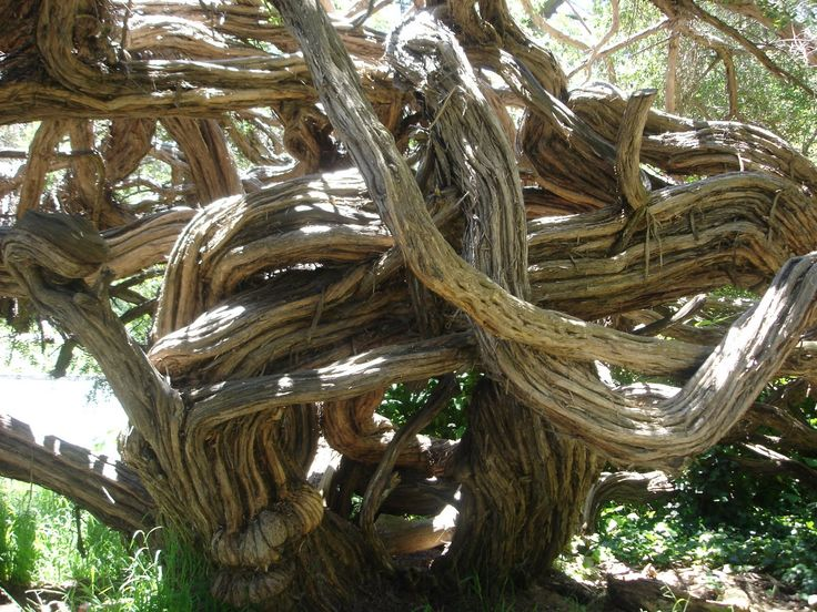 thing that nature toke over - Google Search