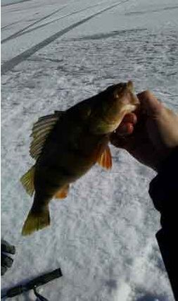 17 best images about ice fishing minnesota on pinterest for Best fishing in minnesota