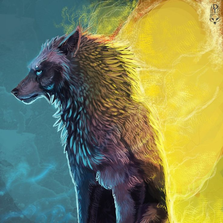 Wolf the dreamer