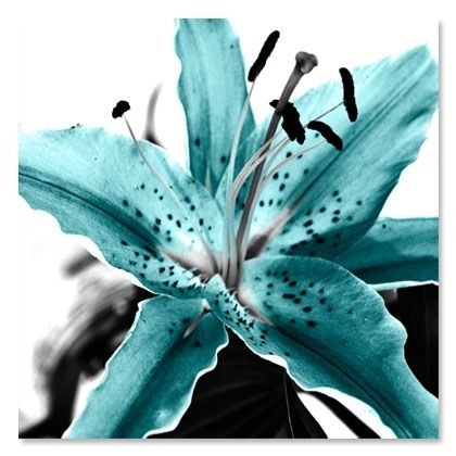 Aqua | teal | blue | stargazer lily | flower