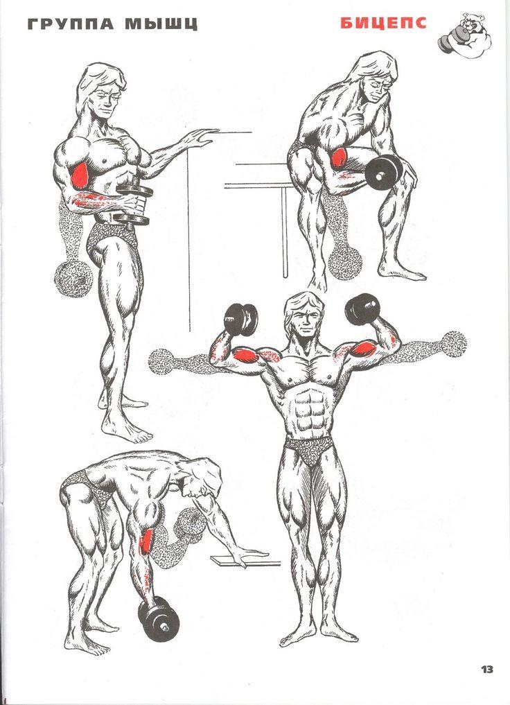 Полные курсы прокачки мышц в картинках