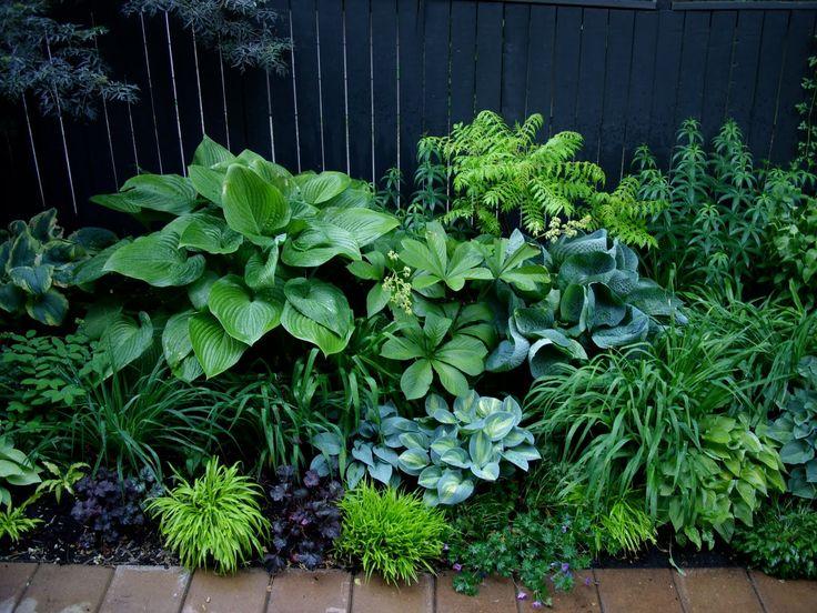 Grüne Bepflanzung I Garten