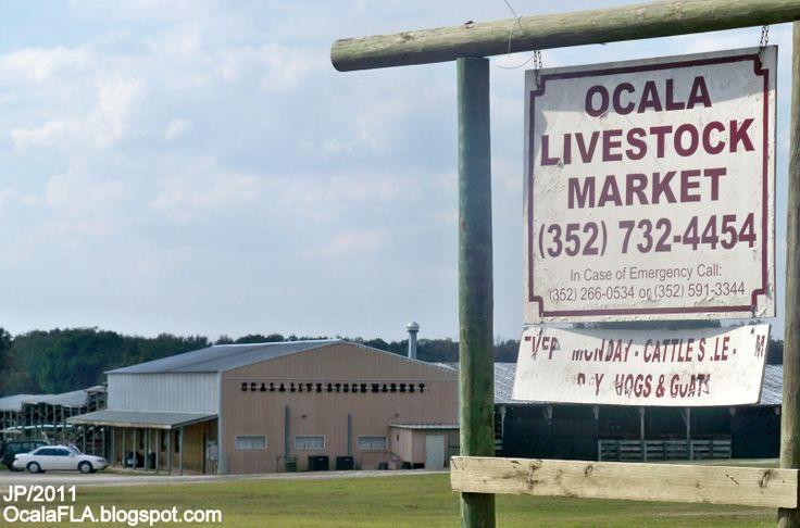 Cow Sales, Ocala Florida Livestock Farm Auction Lake County Ocala FL