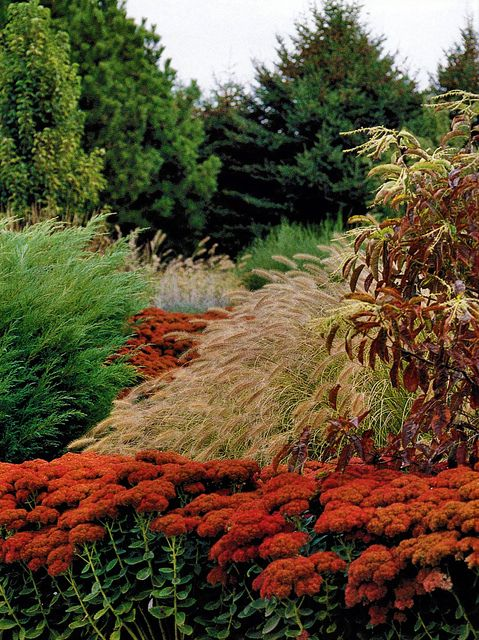 17 best images about flower vegetable gardens on for Ornamental grass that looks like wheat