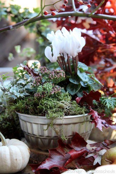 Alte Backform bepflanzt