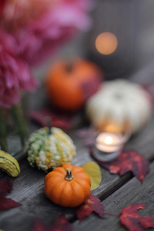 Fall gourdes.