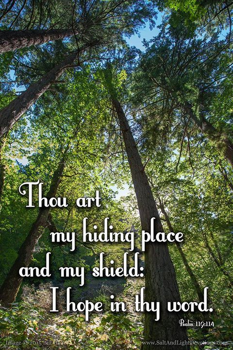 Thou art my hiding place and my shield: I hope in thy word.115 Depart from me ye evildoers: for I will keep the commandments of my God.116 Uphold me according unto thy word that I may live: and let me not be ashamed of my hope.117 Hold thou me up and I shall be safe: and I will have respect unto thy statutes continually. --Psalm 119:114 KJV    http://ift.tt/2dlIsJq  #Bible #inspirational #Psalms