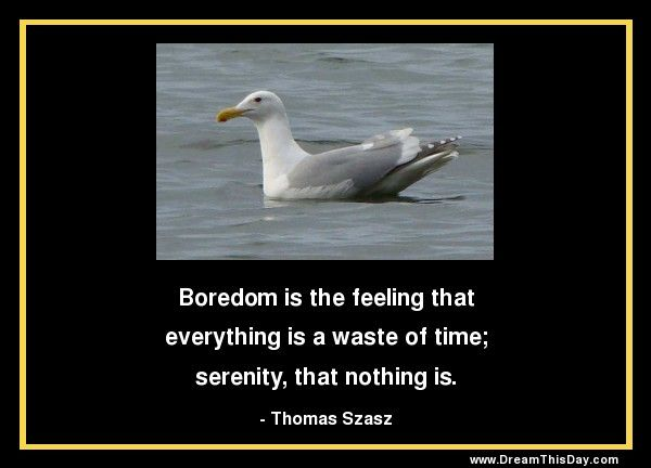 Boredom is the feeling that everything is a waste of time; serenity, that nothing is. - Thomas Szasz