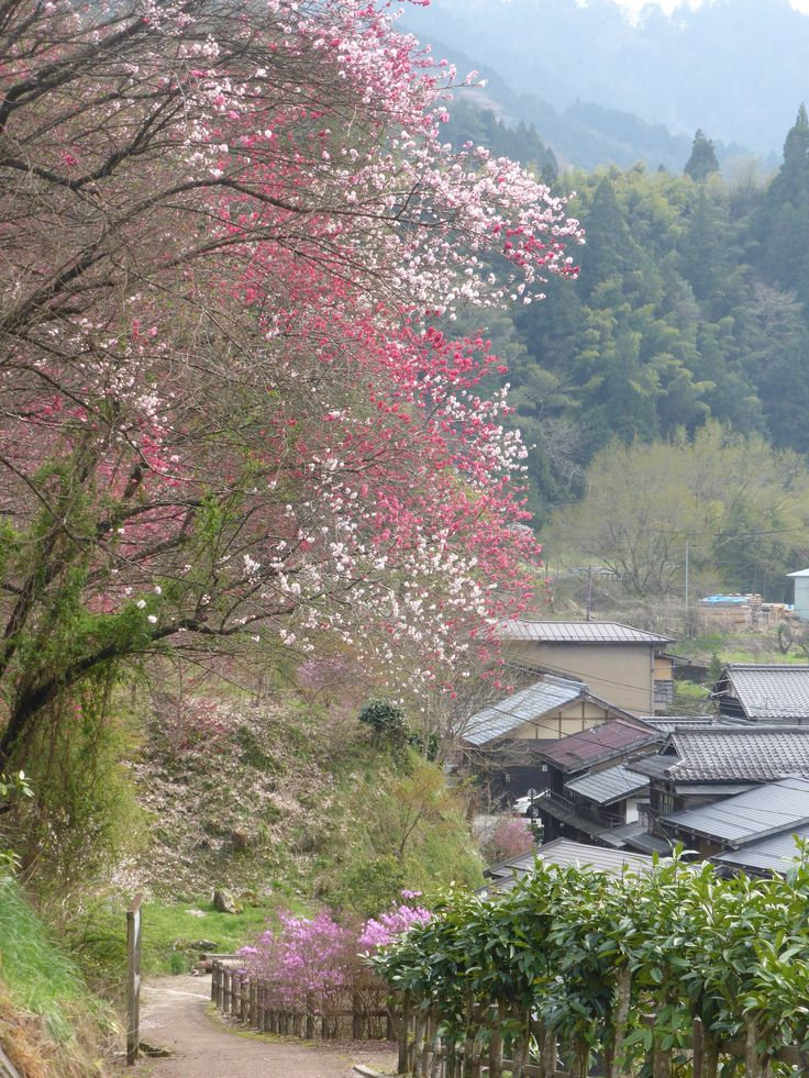 Kiso Valley, April 2015