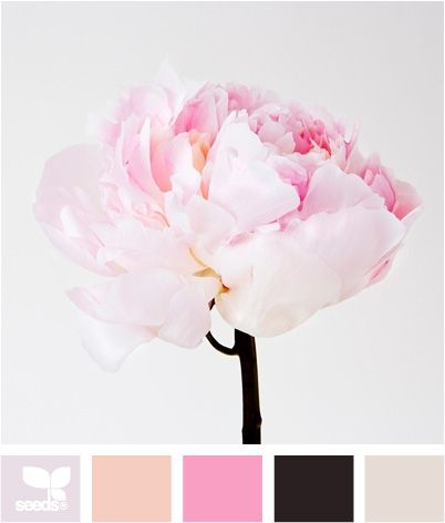 Peony Pinks. How sweet would this be in a little girl's room or nursery? Reminds me of Shelby Eatenton's wedding colors: blush & bashful :)