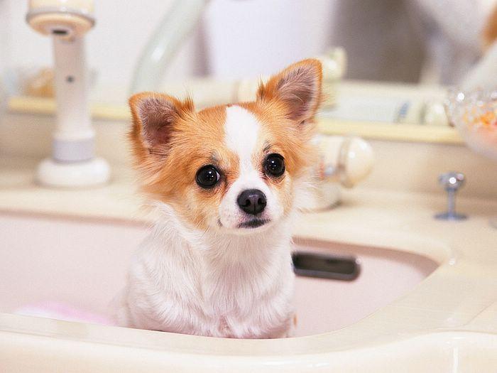 Google Image Result for http://www.wallcoo.net/animal/sz237_lovely_puppy/images/lovely_Puppy_wallpaper_da237016f_wallcoo.com.jpg