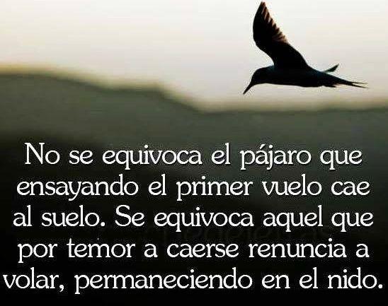 No permanezcas en el nido. #sistema #Venezuela #valencia #Barquisimeto #maracay #Acarigua #ERP #maracaibo #Valera #Barinas #Trujillo #emprededor #contador #empresa by sunsetmanager