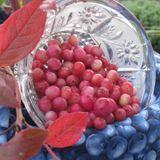 Pink Lemonade Blueberry-Gal Pot [SPRING]