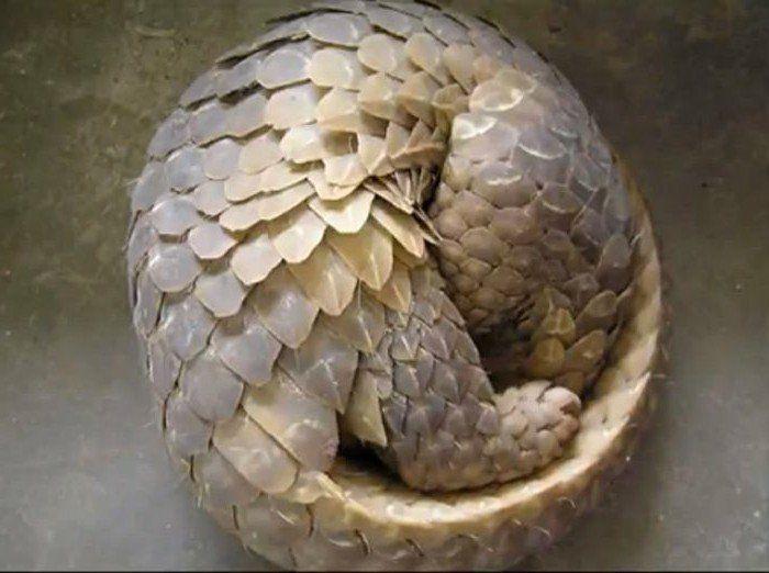 Suite de Fibonacci - en quête de la parfaite harmonie ...