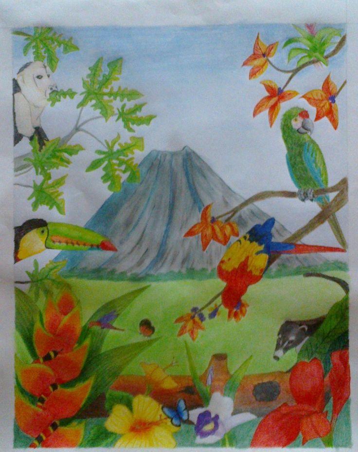 La Flora Y Fauna De Mi Pa 237 S Costa Rica Dibujos