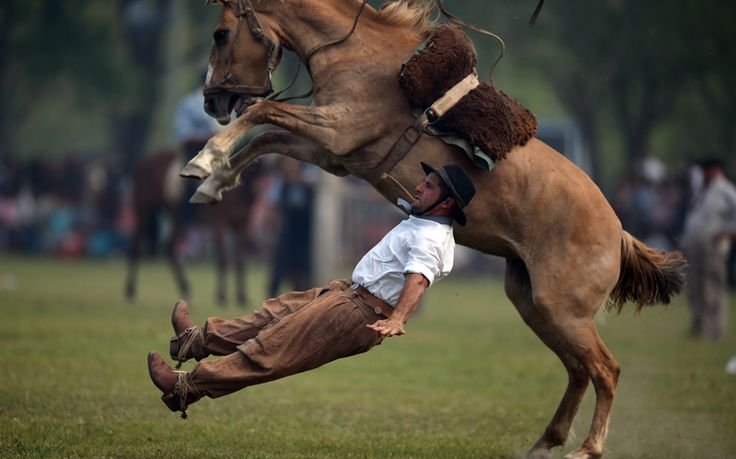 A gaucho falls from a colt at a rodeo exhibition during 'Tradition Day' in San Antonio de Areco, Argentina