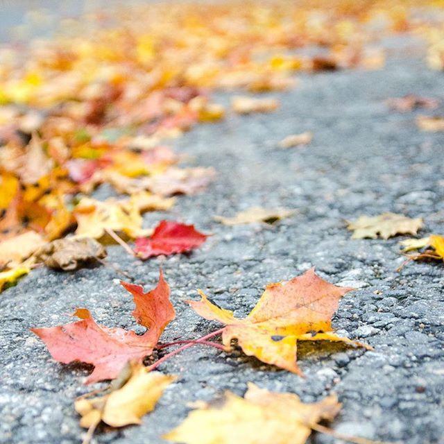 Hello October! 🍂⠀  ⠀  #hellooctober #fall #autumn #october #syksy #lokakuu #ruska #vaahtera #mable #fallenleaves #fallbeauty #colors #picoftheday #igers #bloggers #blogi